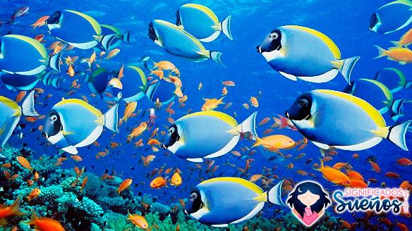soñar con agua y peces