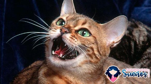 soñar con gatos maullando