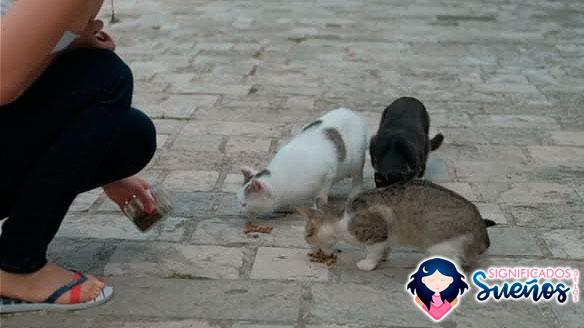 soñar gatos hambrientos