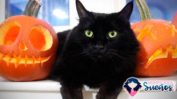 soñar con gatos negros