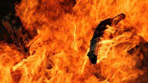 animales en llama imagen