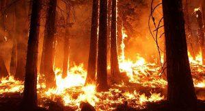 arbol quemandose portada
