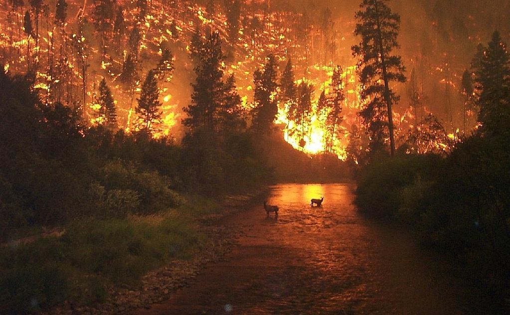 soñar con incendio forestal