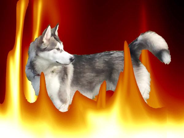 soñar con perro ardiendo
