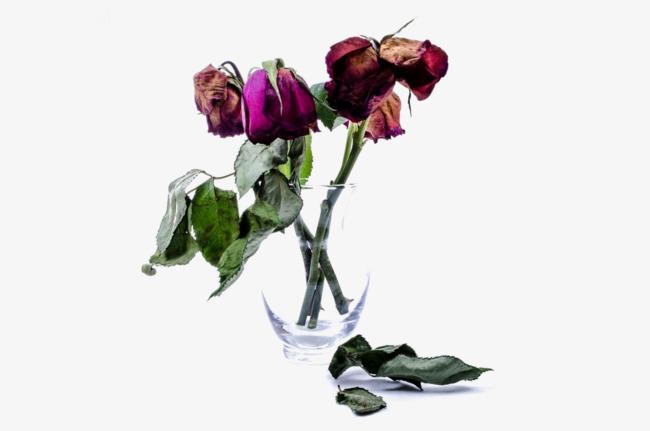 soñar con rosas marchitas