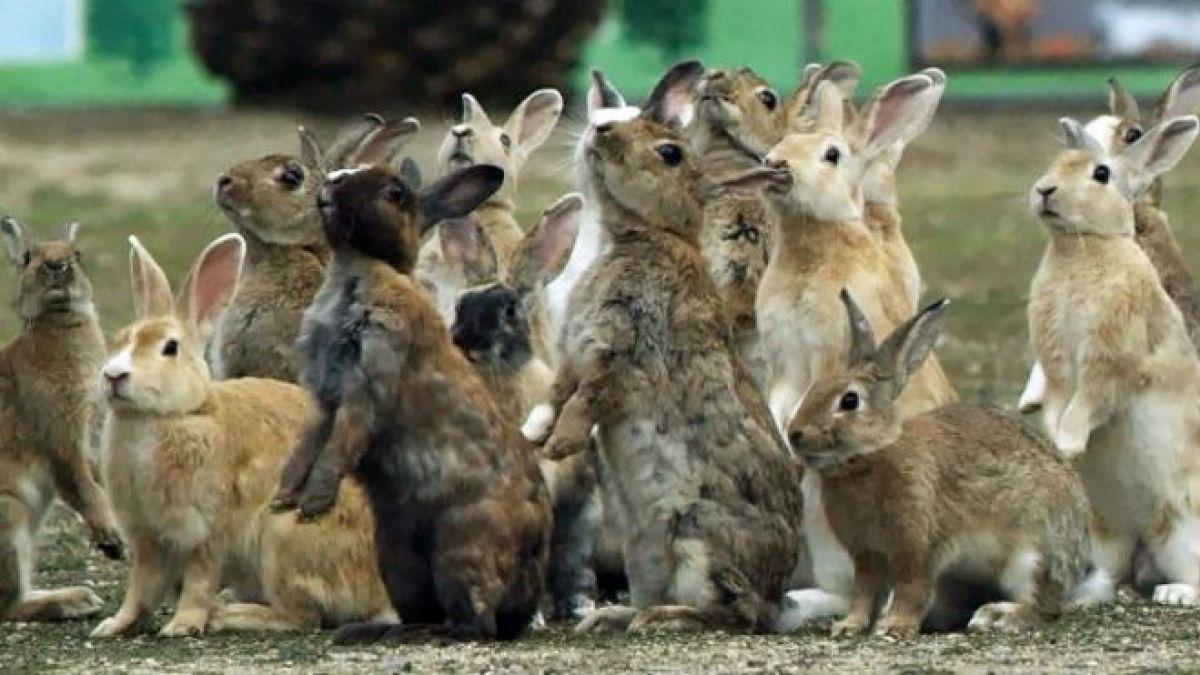 conejos que hablan
