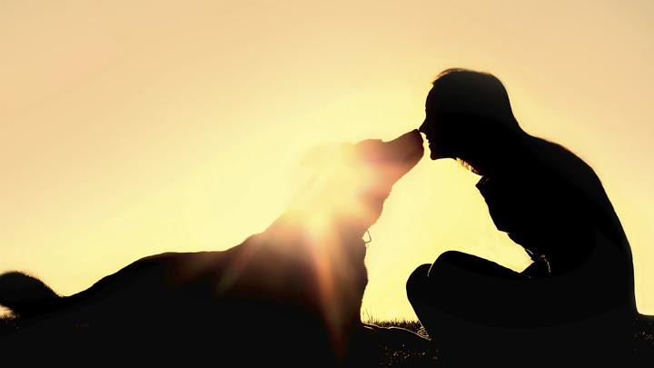 sueño recurrente con mascotas