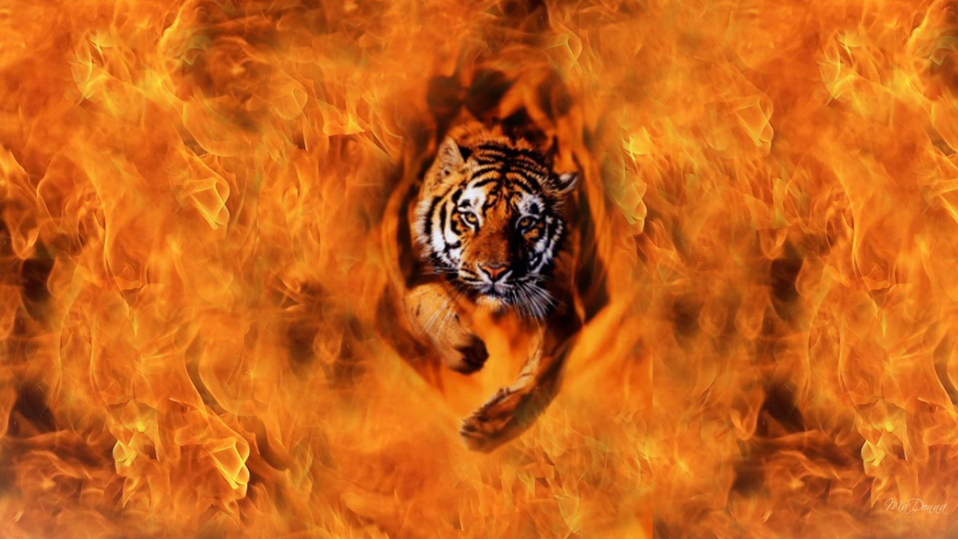 soñar con tigre quemandose