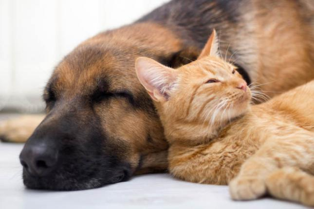 perro y gato soñando mientras duerme