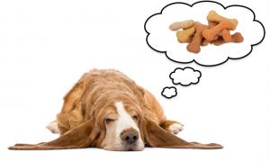 ¿Los animales también sueñan?