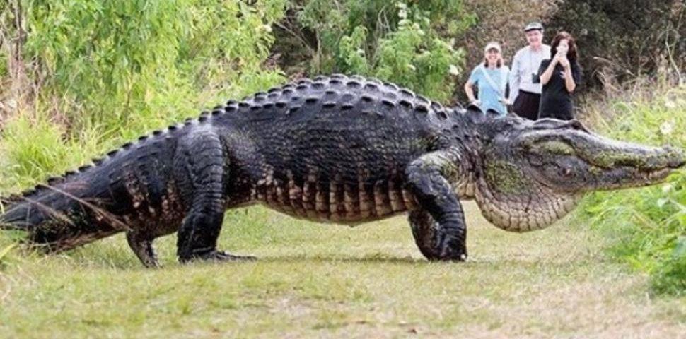 soñando con cocodrilos atacando imagen