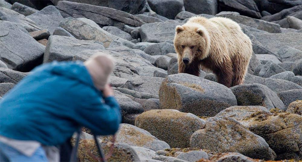 soñando con oso al ataque imagen