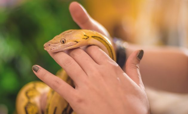 soñar que juegas con serpiente