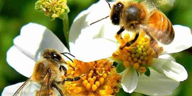 soñar con abejas buenas