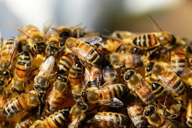 enjambre de abejas sueño