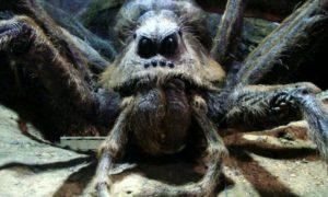 Soñar con arañas gigantescas
