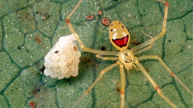 arañas de colores sueñan