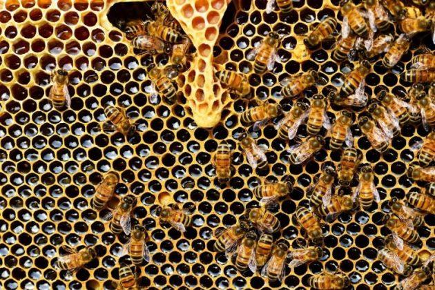 panal de abejas en sueño