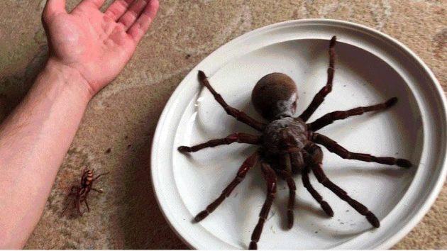 araña inmensa imagen