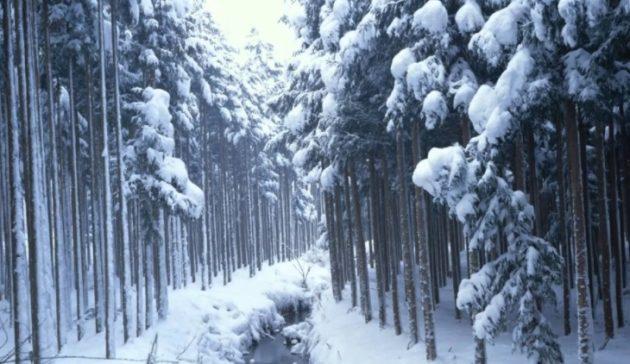 soñar con nieve imagen