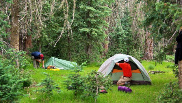 acampar en bosque imagen 1