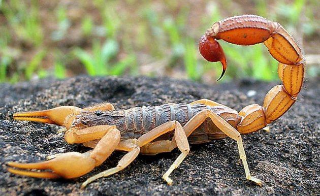 soñar con escorpiones imagen