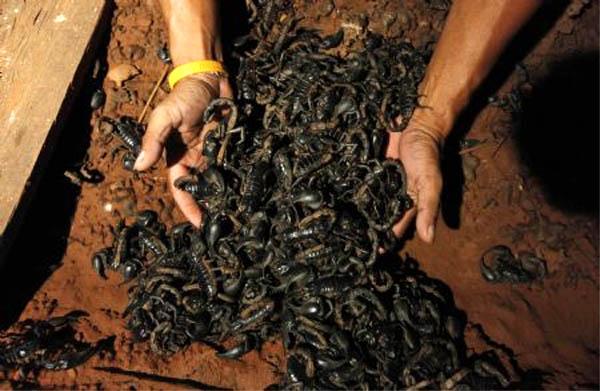 soñar con muchos escorpiones imagen
