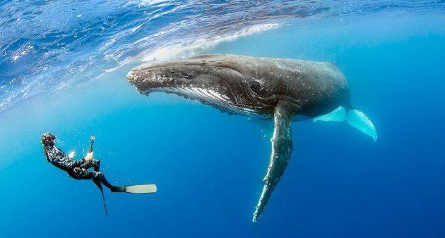 soñar con ballenas imagen 2
