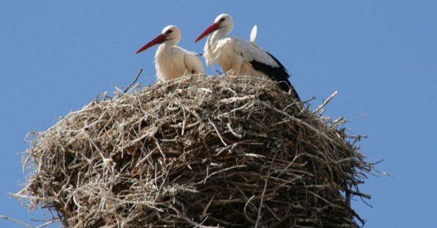 soñar con nido de cigueñas