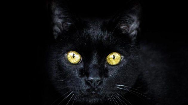 soñar con gato negro imagen