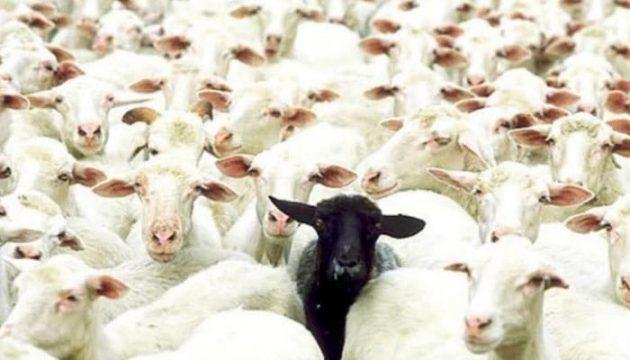 soñar con ovejas imagen