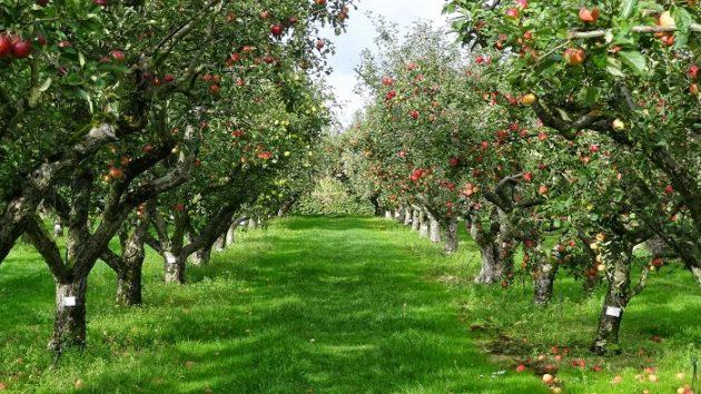 soñar con arboles