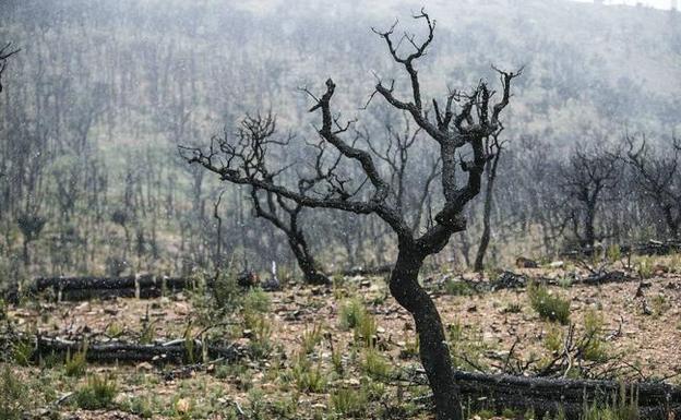 árboles quemados imagen