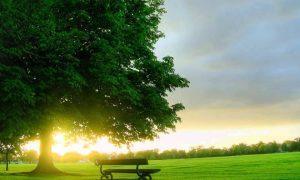 Soñar con Plantar Árboles
