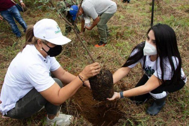 plantar árboles imagen