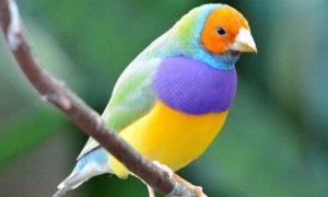 Soñar con Aves Hermosas
