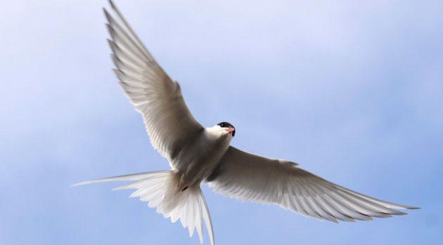 soñar con aves 1