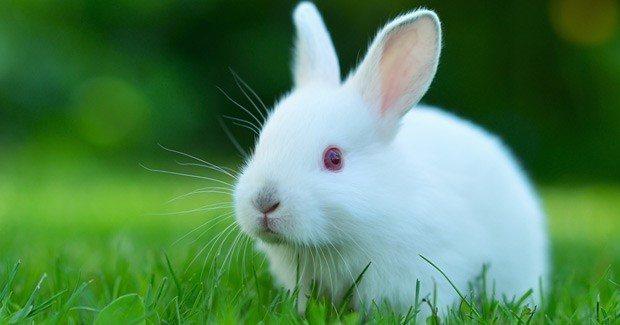 conejo blanco imagen