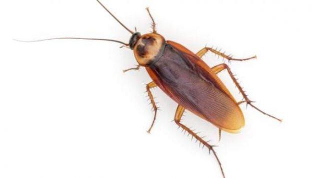 soñar con cucarachas imagen
