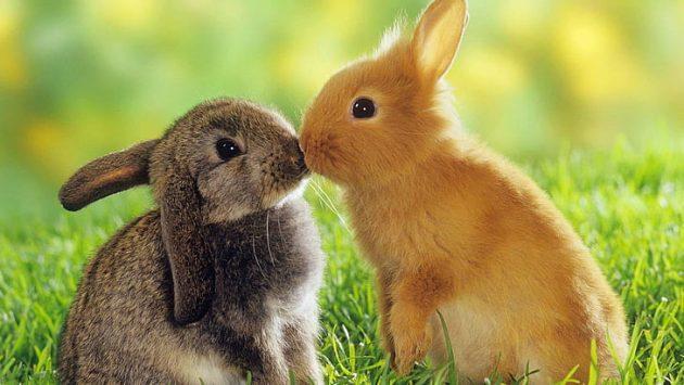 soñar con conejos imagen 1