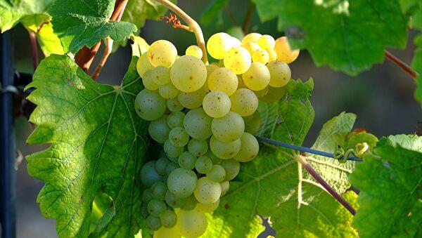 soñar con uvas imagen 1